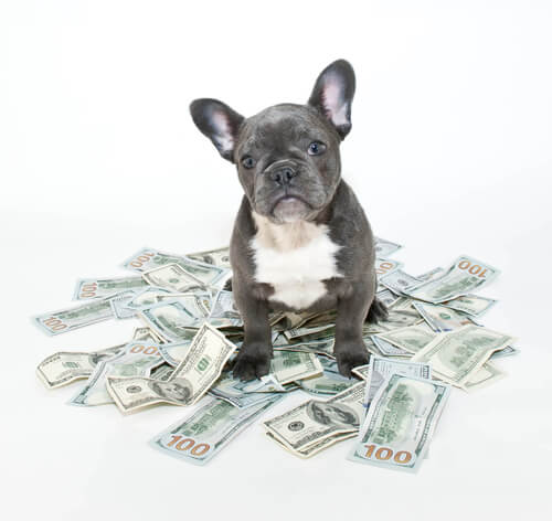 How Much is a Puppy Worth?